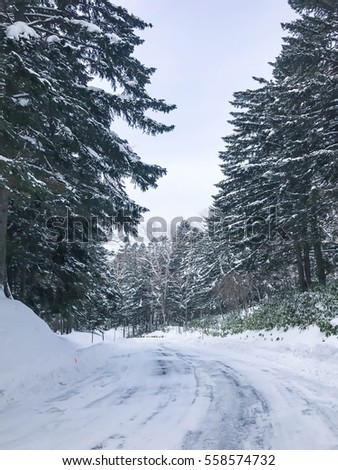 empty way with group of frosty spruce trees in snow