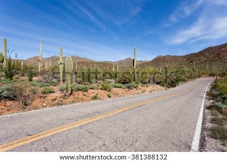 Empty winding highway road in Saguaro National Park near Tucson, Arizona, US, with green Sonoran Desert vegetation and iconic Saguaro cacti, Carnegiea gigantea - stock photo