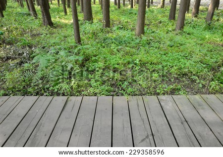 Empty wooden platform with forest background - stock photo