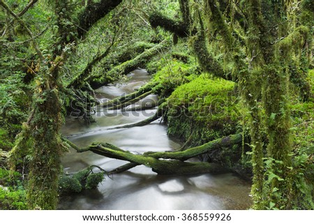 Enchanted Forest, Queulat National Park (Chile)
