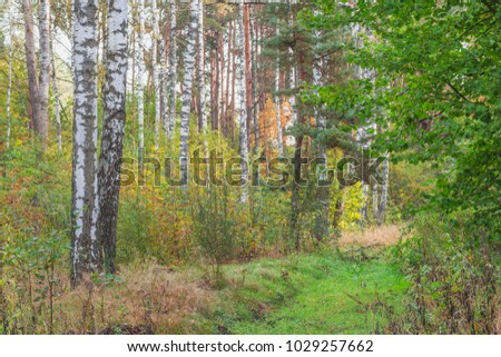 End of summer in the forest. The month of August.Nature in the vicinity of Pruzhany, Brest region, Belarus.