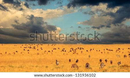 End of the Great Migration - Serengeti National Park, Kenya - stock photo
