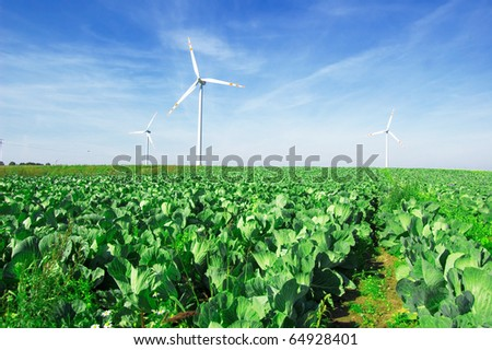 Energy conceptual image. Windmills on cabbage field. - stock photo
