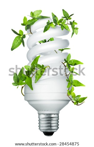 Energy saving lightbulb with ivy - stock photo
