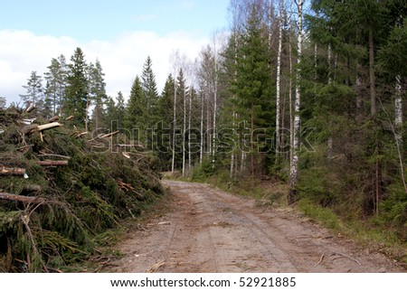 Energy Wood In Forest - stock photo
