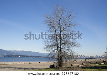 English Bay, Vancouver - alone tree on the Kitsilano beach, British Columbia, Canada - stock photo