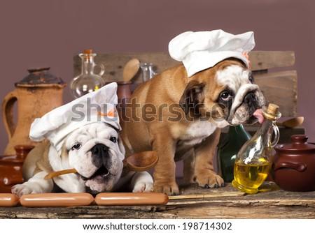 english Bulldog puppies in chef's hat - stock photo