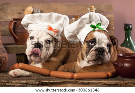 english Bulldog puppies in chef's hat - stock photo