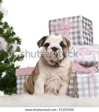 English Bulldog puppy, 2 months old, sitting with Christmas tree and gifts in front of white background