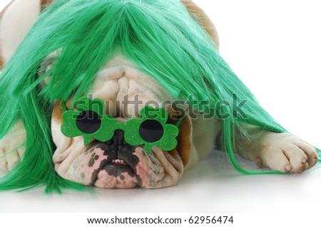 english bulldog wearing green wig and shamrock glasses with reflection on white background - stock photo