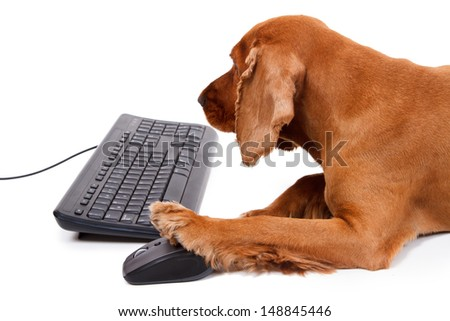 English cocker spaniel dog using mouse and keyboard, isolated on white background.