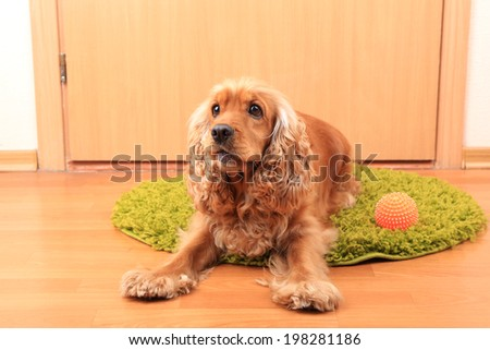 English cocker spaniel on rug near door - stock photo