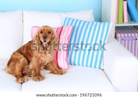 English cocker spaniel on sofa in room - stock photo