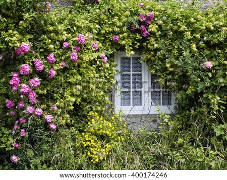 English Country Cottage Window; window surrounded by climbing roses and honeysuckle  - stock photo