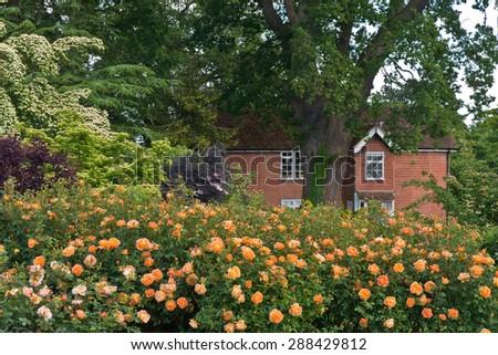 English country garden - stock photo