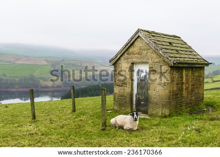 English countryside with small stone cottage and sheep. - stock photo
