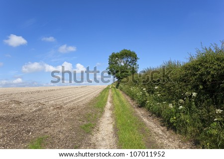 english landscape with a farm track running between the chalky soil of a potato field and a hawthorn hedge with wildflowers under a blue summer sky - stock photo
