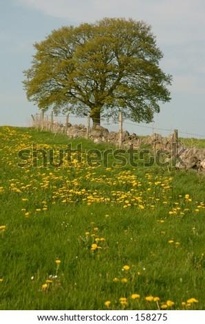 English Meadow - stock photo