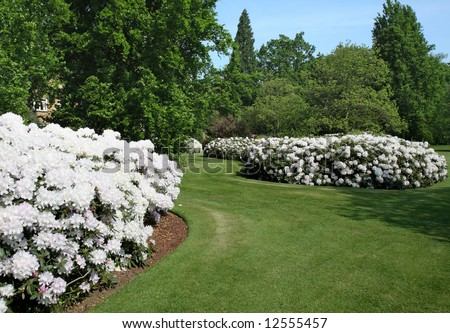 English Park in the early Summer Sunshine with flowerbeds abloom with Rhododendrons - stock photo