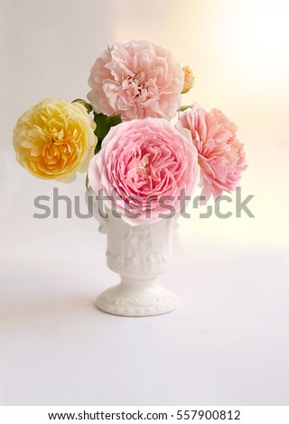 English roses isolated sweet For Valentine's Day, on vintage white background