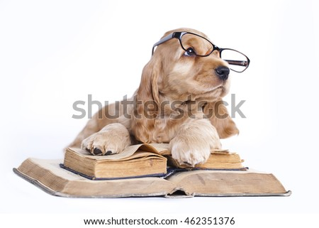 english spaniel, in glasses and book