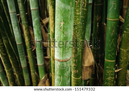 Engravings on the bark of a bamboo - stock photo