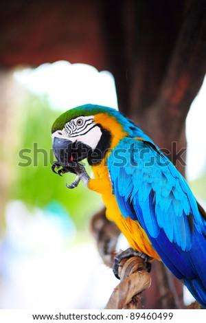 enjoy eating macaw - stock photo