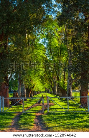 Entrance to a pasture with trees in a row in Uribelarrea, Argentina - stock photo