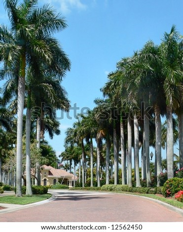 Entry driveway to upscale American residential community. The brick road is lined with tall, Royal Palm trees and leads to a guardhouse for the gated community. It is a sunny day with a blue sky.