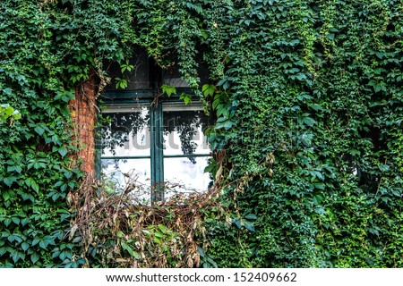 entwining vine around a window - stock photo