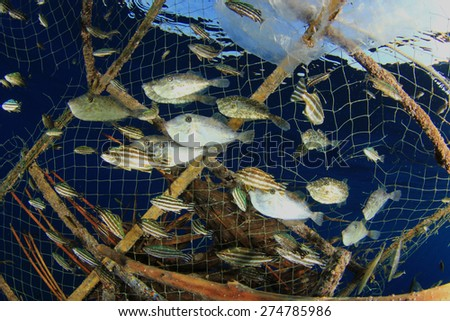Environmental problem - fish stuck in a fisherman's trap - stock photo