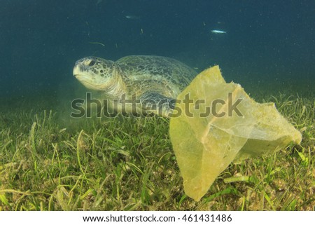 Environmental problem: plastic bags on ocean floor threat to turtles