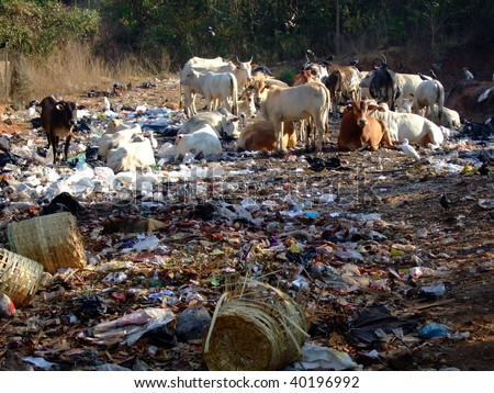 garbage problems in goa essays Goa powder information based on scientific evidence includes description, drug interactions, safety concerns, and effectiveness.