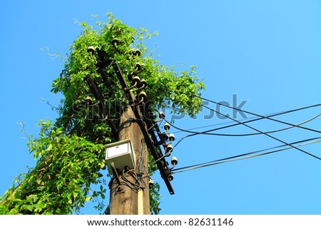Environmental protection concept. Electric pole overgrown with ivy - stock photo