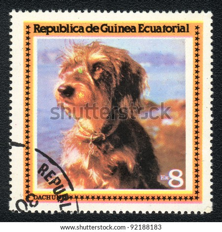 EQUATORIAL GUINEA - CIRCA 1978: A stamp printed in EQUATORIAL GUINEA shows  a Wire-haired dachshund,  from series Breeds of dogs, circa 1978 - stock photo