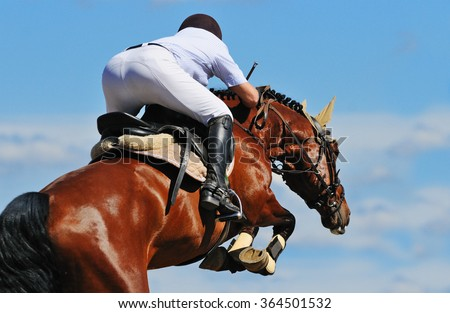 Equestrian: Rider on bay horse in jumping show - stock photo
