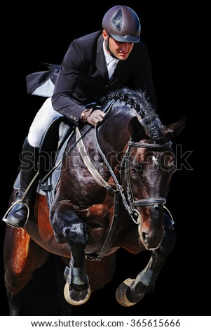 Equestrian: rider with bay horse in jumping show, isolated on black background - stock photo