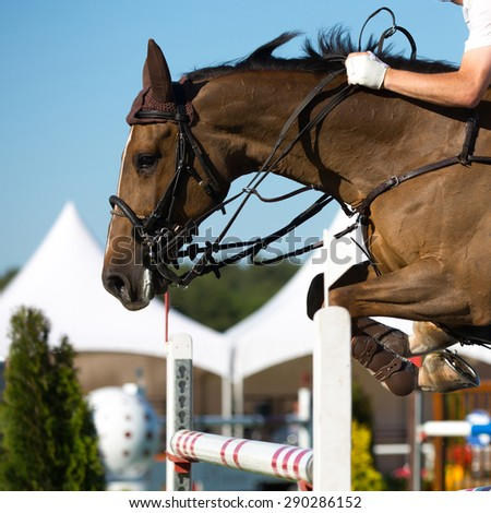 Equestrian Sports, Horse Jumping - stock photo