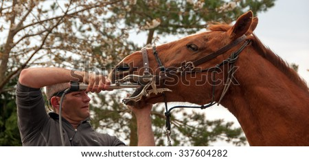 Equine dentist providing a routine dental appointment  - stock photo