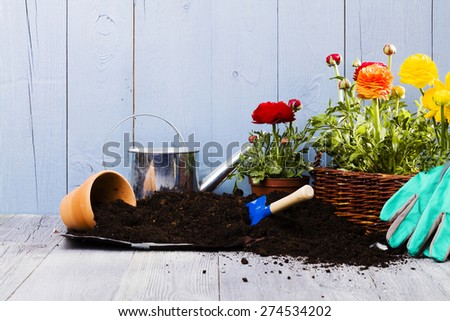 Equipment for planting flowers in the home garden - stock photo