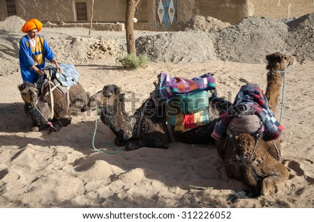 Erg Chebbi, Morocco, Circa May 2013: Tuareg preparing camel to the Sahara Desert, Merzouga, Erg Chebbi in Morocco