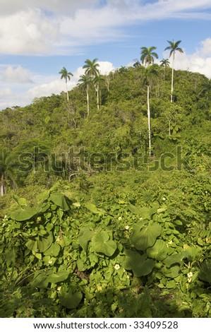 Escambray mountains - stock photo