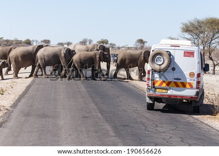 ETOSHA, NAMIBIA - OCTOBER 25 2013: Elephants cross street in a designated year of drought at Etosha National Park in Nambia, Africa - stock photo