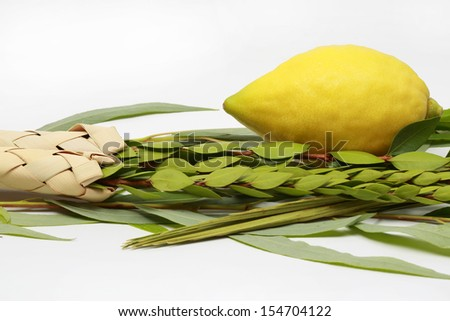 Etrog (citron fruit), hadass (myrtle branches), Lulav (Date palm tree branch) and Aravah (Willow) Used in a ceremony of the Jewish holiday of Sukkoth. Isolated on white.