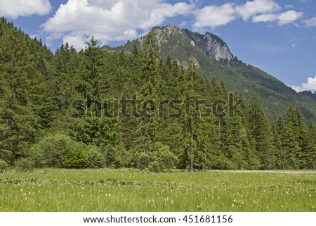 Ettal Weidmoos in Graswang Valley against the background of the Laber - stock photo