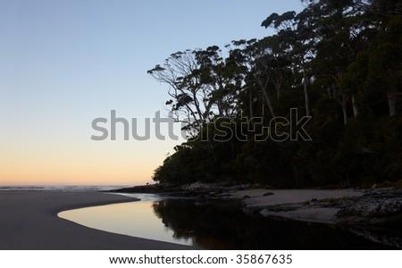 Eucalyptus forest on ocean beach at dawn - stock photo