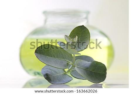 Eucalyptus - oil and eucalyptus leaves ,bottle in background - stock photo
