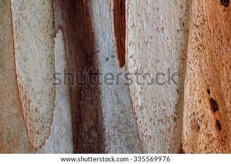 Eucalyptus tree bark texture. - stock photo