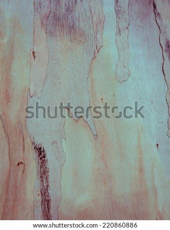 Eucalyptus tree bark texture background