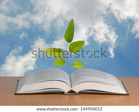 Eucalyptus  tree growing from open book - stock photo